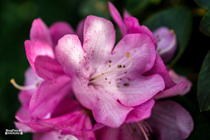 Blomst med guld