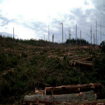 Orkanen2013