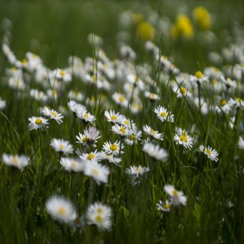 Frøens blomster perspektiv