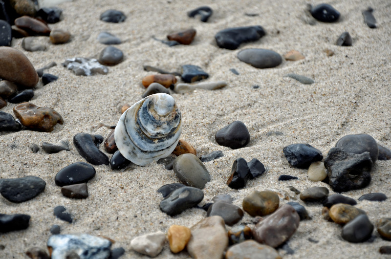 Strand med skal på højkant