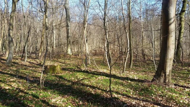 Gråsten skov