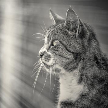 Katten Cat