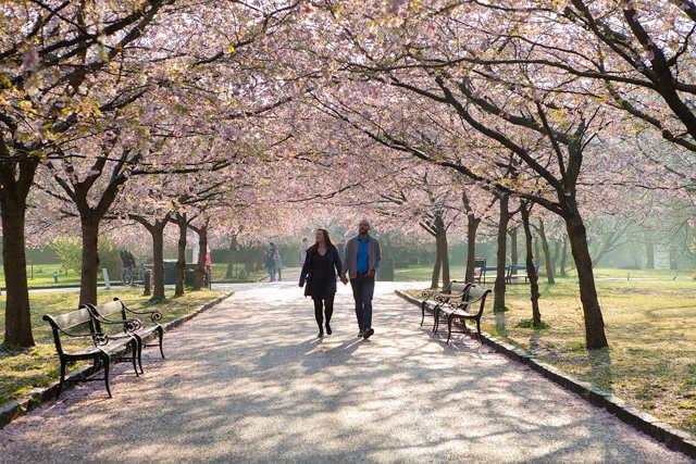 Forårs kærestepar