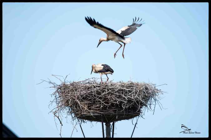storke fra smedager
