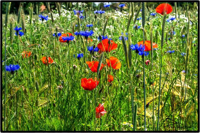 masse af blomster