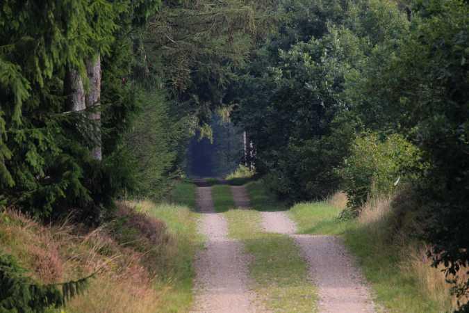 Ind i Skoven