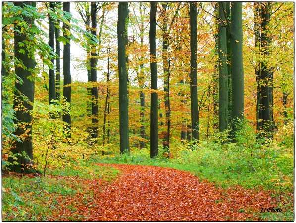 Skoven er smuk pt.
